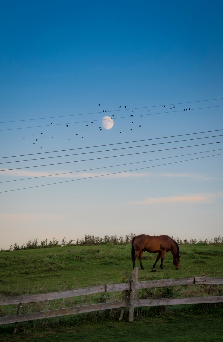 horse grazes birds full moon - photo - markcollier | ello