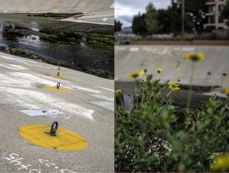 Yellowness LA River - nature, beauty - talyo | ello