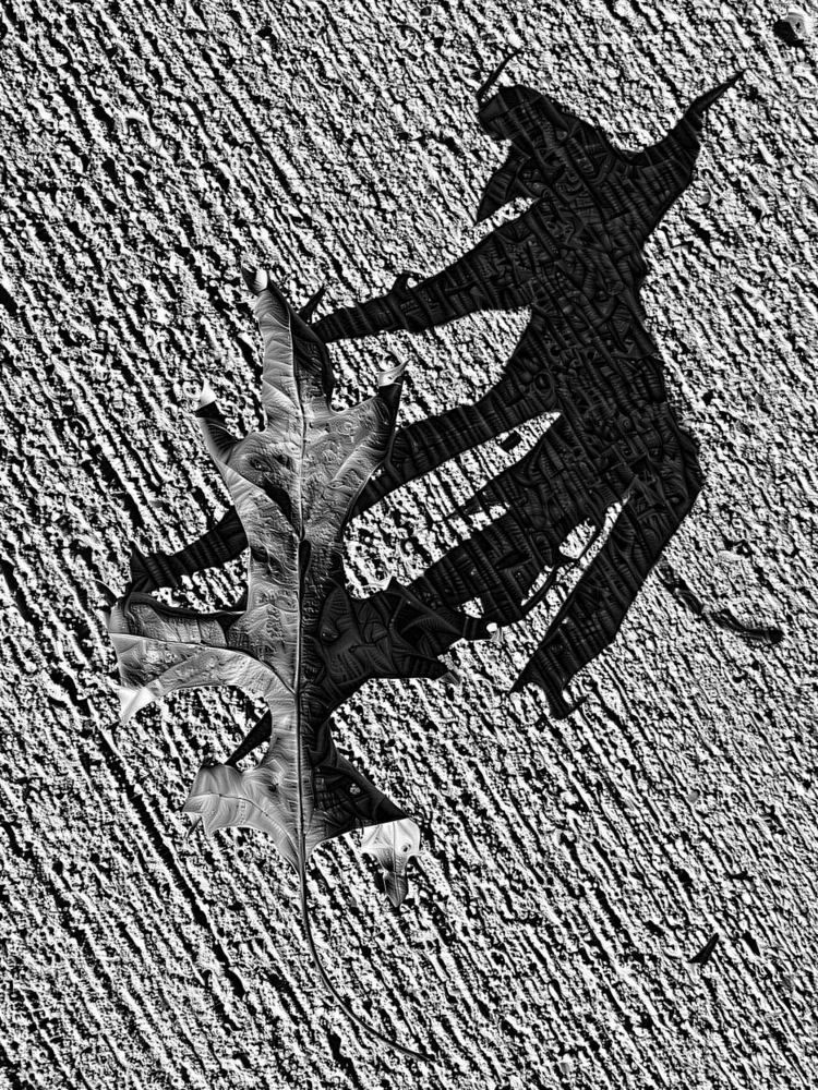 Leaf sunny day - photography, shadow - kenlong | ello