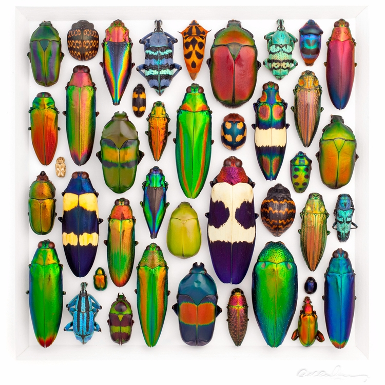 16×20 Coleoptera Mosaic origina - christophermarley | ello