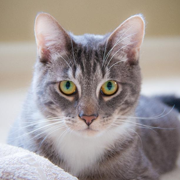 COMMENT SHARE Meet: Boris, Neut - snapcats | ello