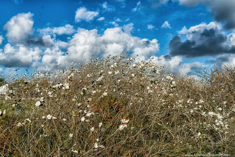 Project Dunes - photography, Naturephotography - arnevanoosterom | ello
