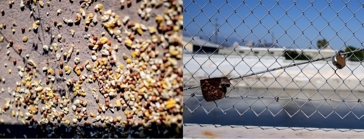 Free seeds pointless locks LA R - talyo | ello