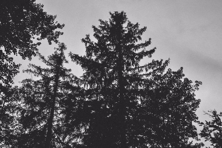 trees, dark, grain, forest, blackandwhite - captain_lukhasan | ello