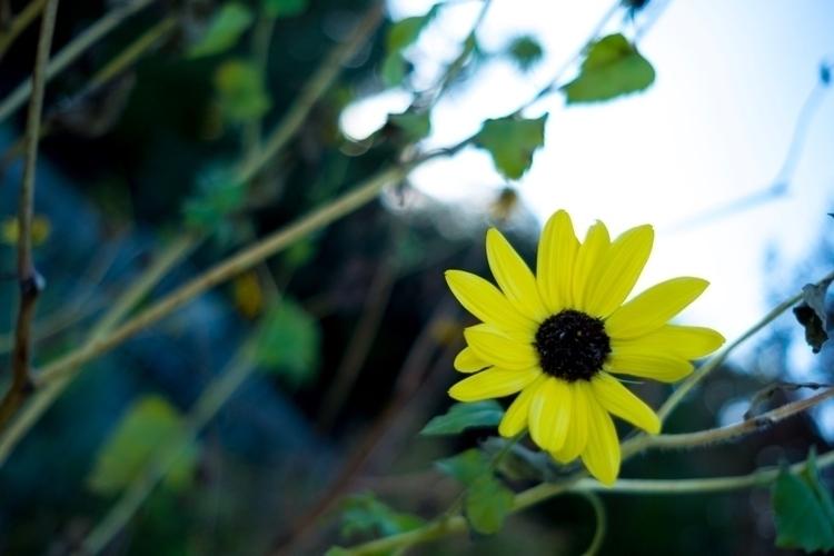 flower - beaupearce | ello