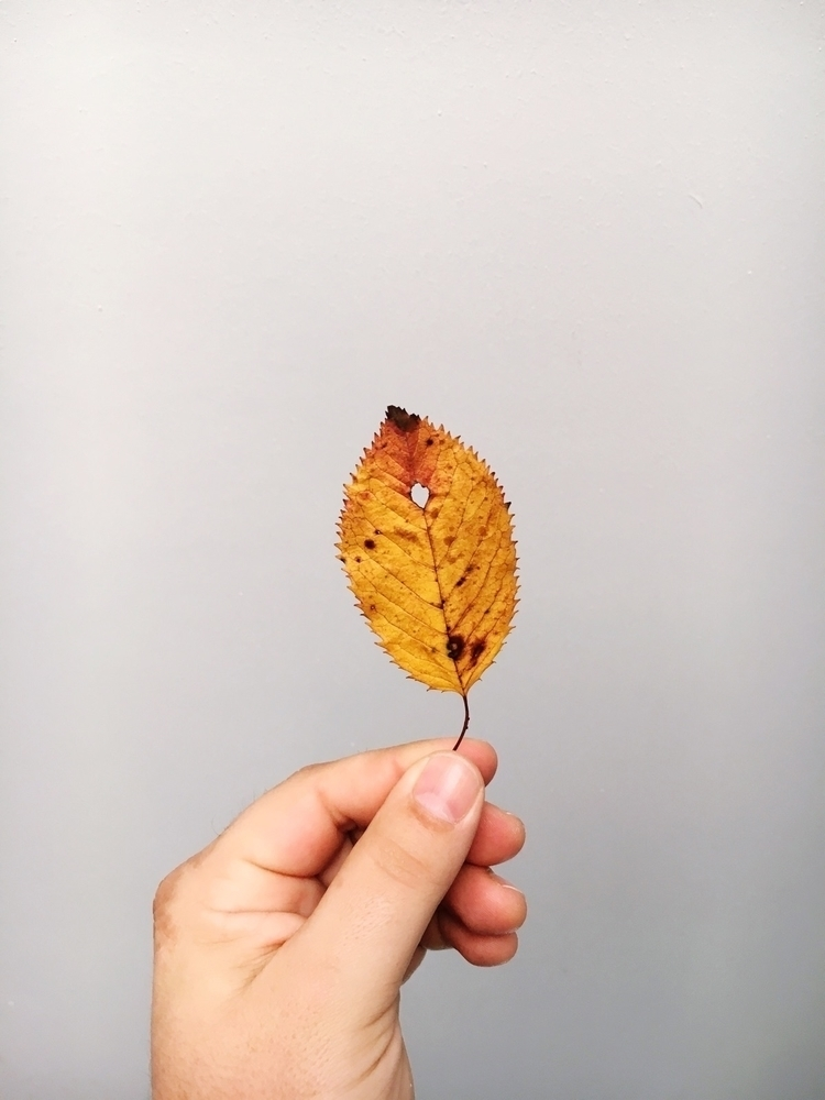 autumn - Fall, fallbeauty, illmedia - ill_media | ello