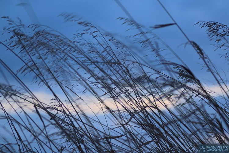 Grass Wind - photography, photo - pawelwiesyk | ello