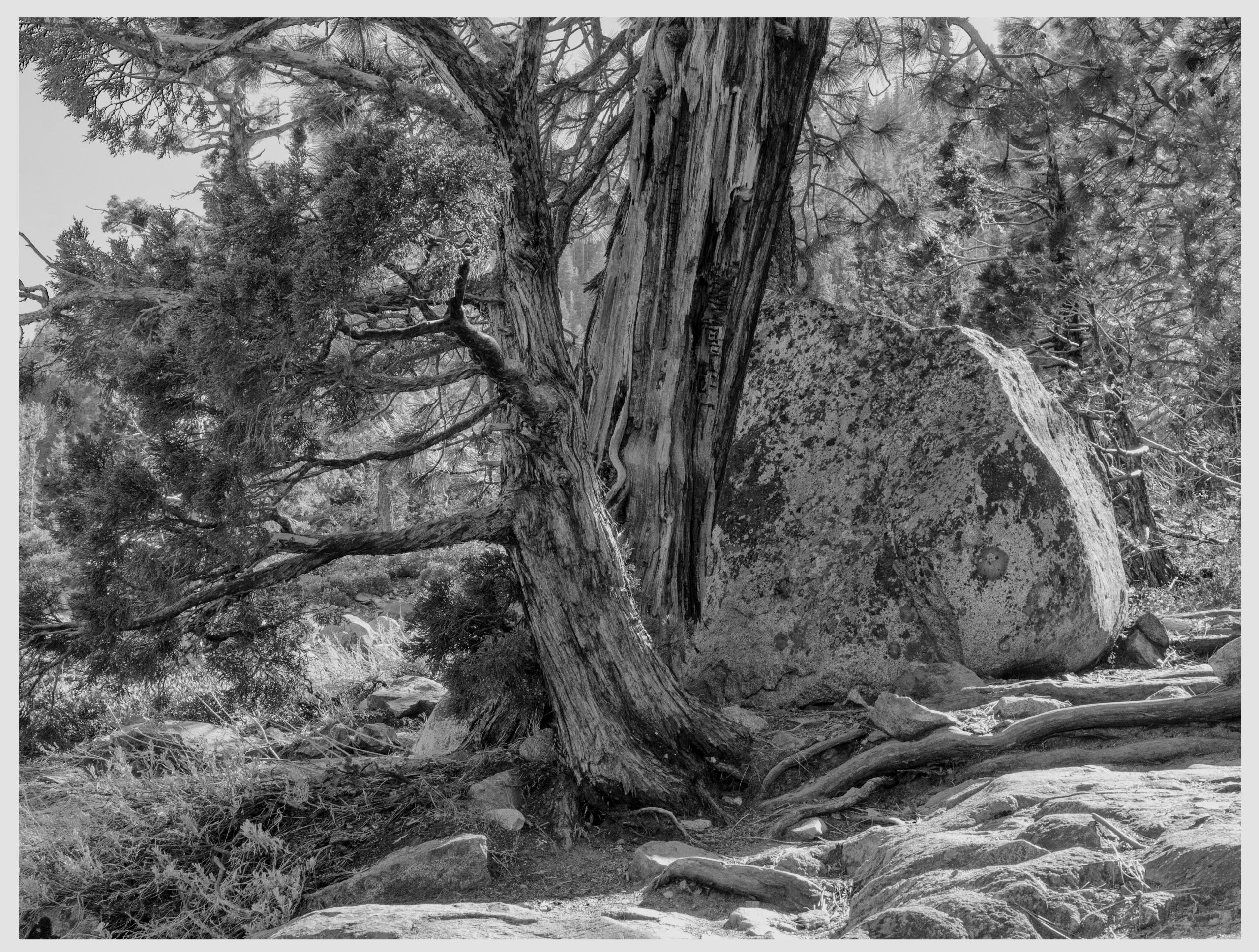 Esmerald Bay State Park, CA - guillermoalvarez | ello