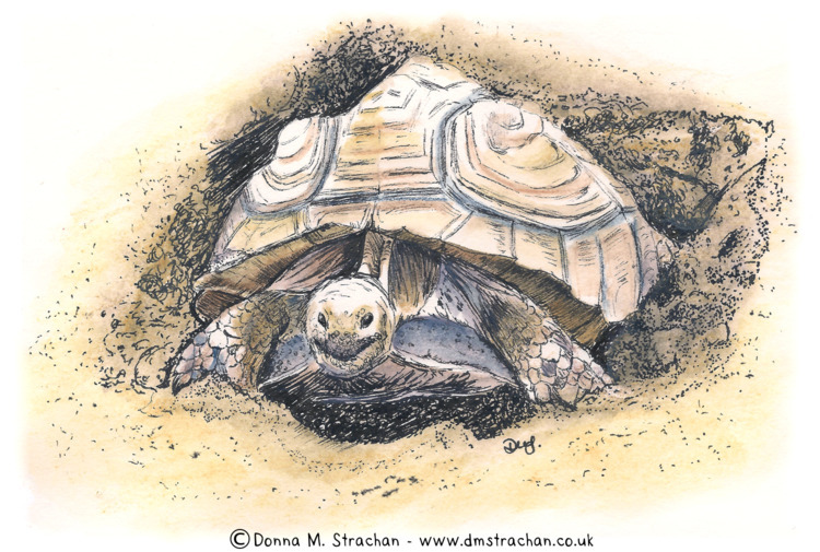 Great Excavations - tortoise di - donnamstrachan | ello