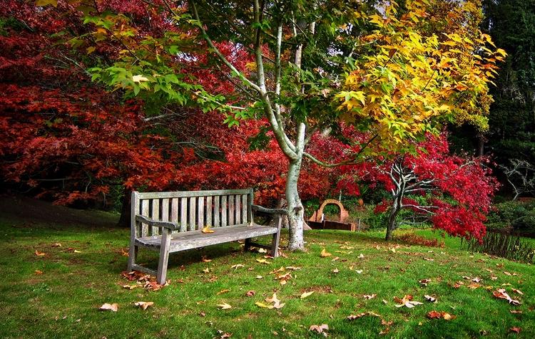 Legend Fall Autumn Plymouth, Ze - peter_kurdulija | ello