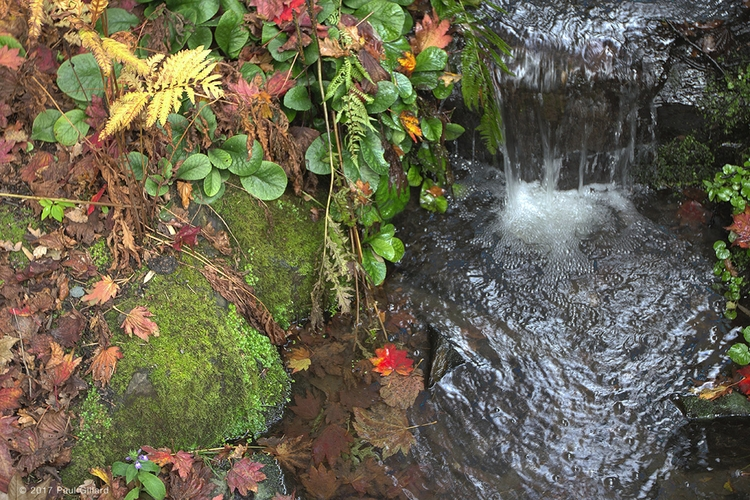 Title: 'Autumn Leaf' - (hdr ima - paulgillard | ello
