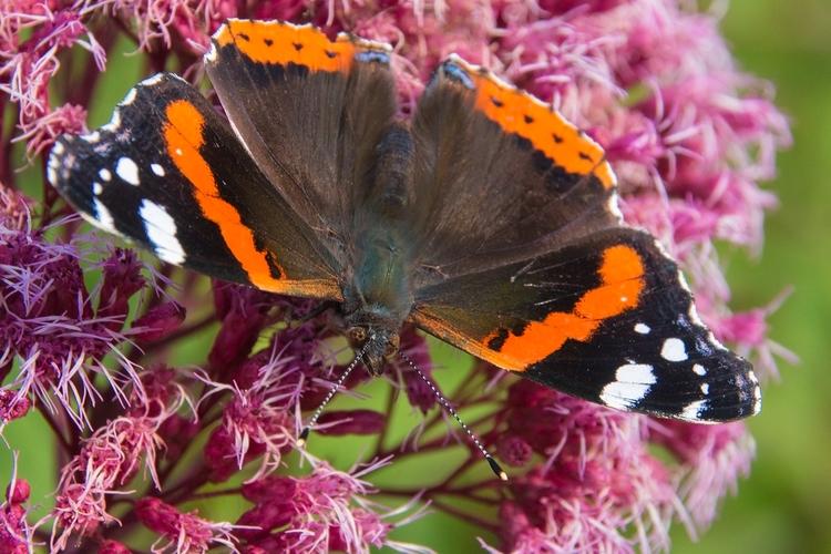butterflies season, clinging re - tomsimonsen | ello