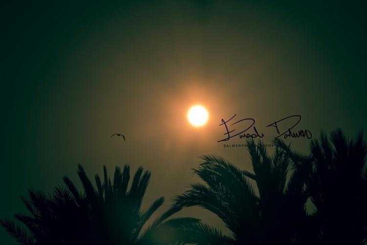bird, trees, palmtree, sky, sun - dalwenphotography | ello