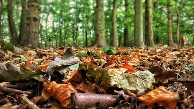 leaves - trees, autumn, fall, nature - davidhawkinsweeks | ello