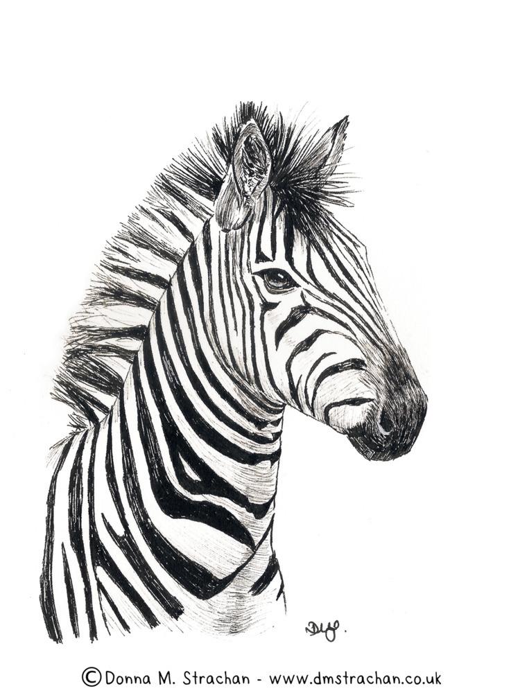 zebra day 9 - inktober., inktober2017 - donnamstrachan | ello