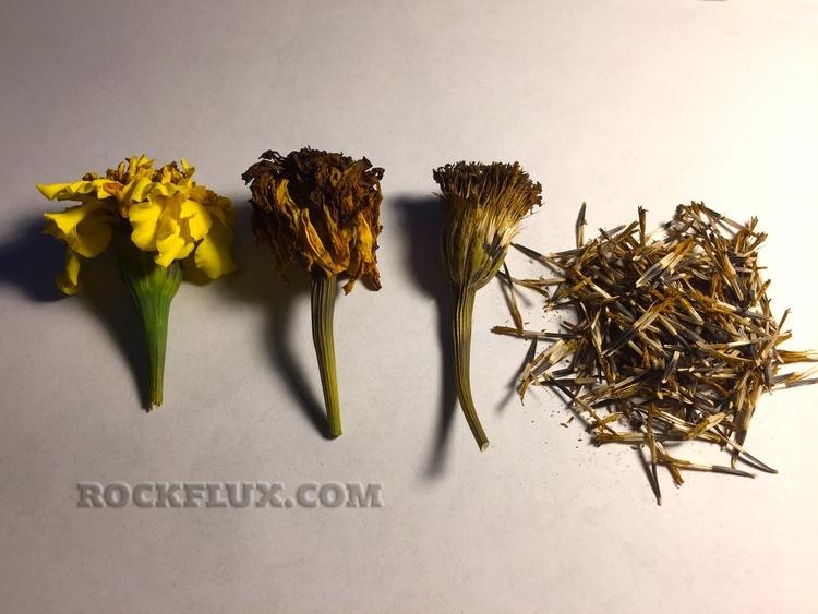 harvest time food plants, flowe - adverteria | ello