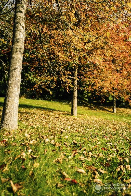 Automne - autumn - olivier_drean | ello