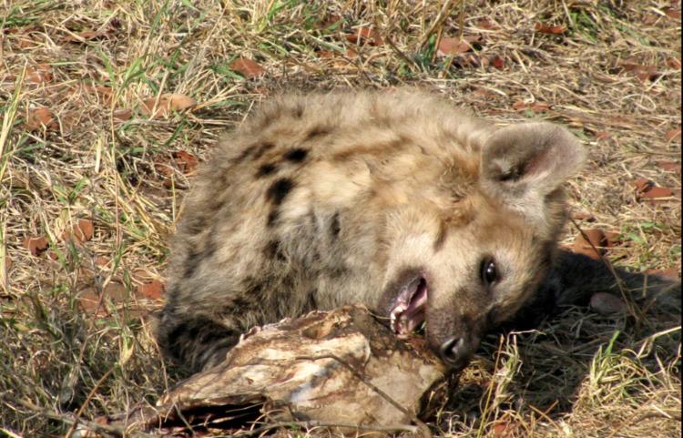 5 Tips Americans Tour Kruger Na - janeflowers | ello