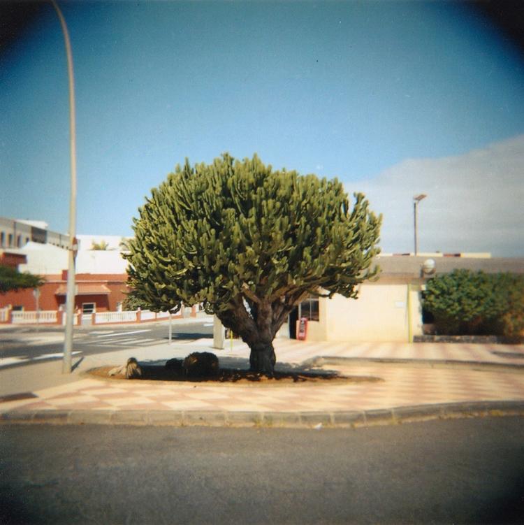 Cactus - photographer, photo, photography - acidecabine | ello
