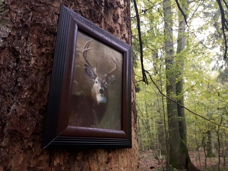Białowieża Forest Death Tree Fo - matyjaszewski   ello