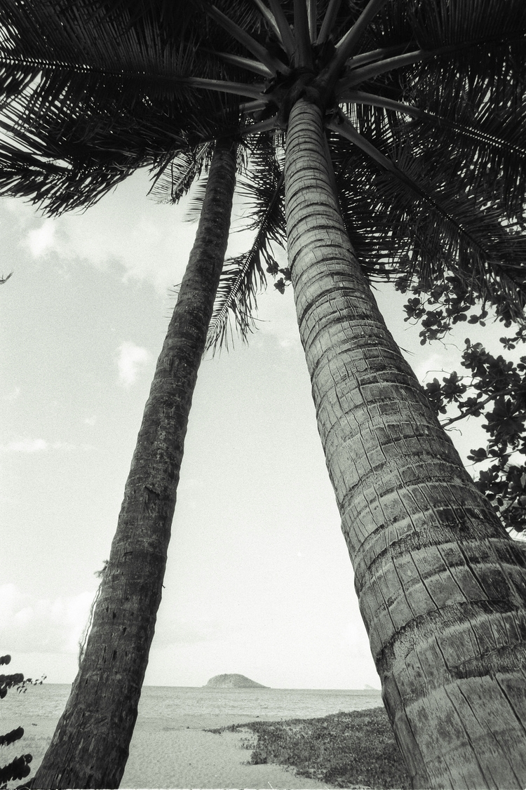 Tropical lines, love palm trees - nonophuran | ello