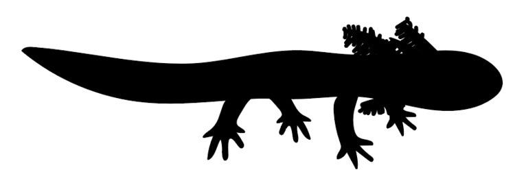 axolotl silhouette work - blackandwhite - bruceworden | ello