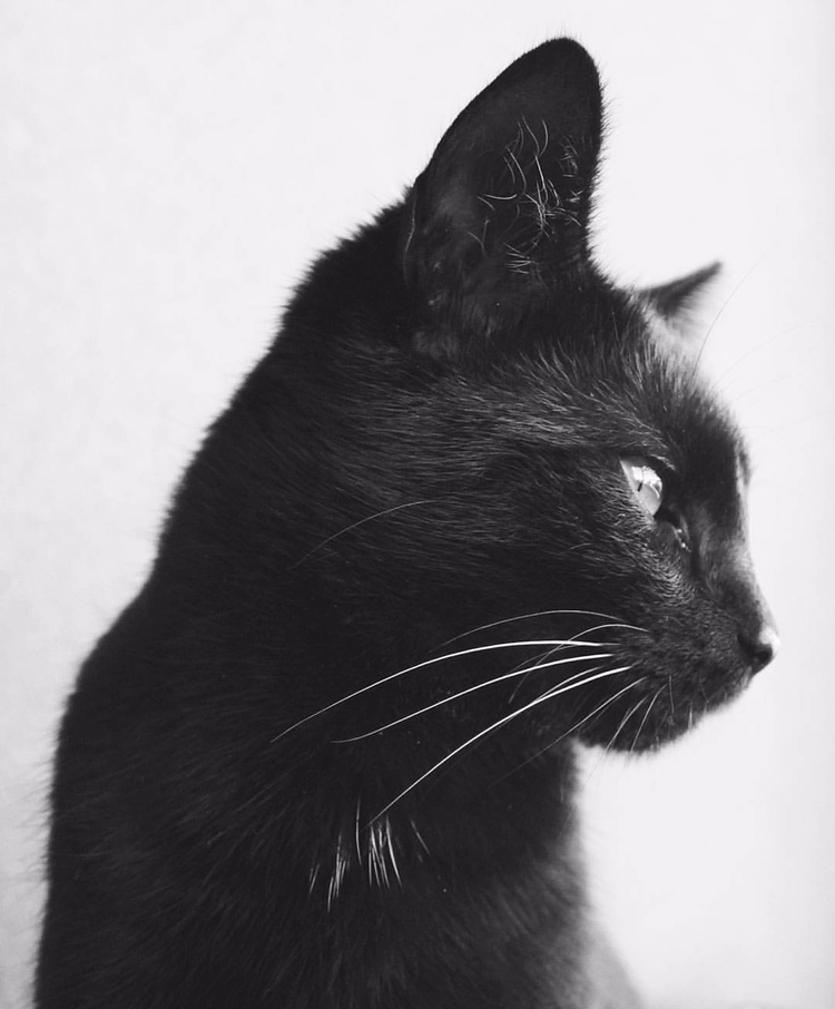 blackandwhite, cat - domiprim | ello