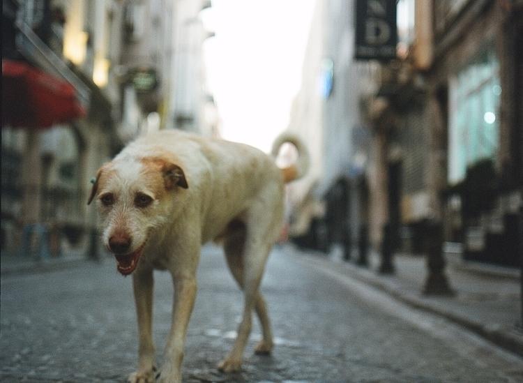 scraggly friend, living streets - riceballthief | ello