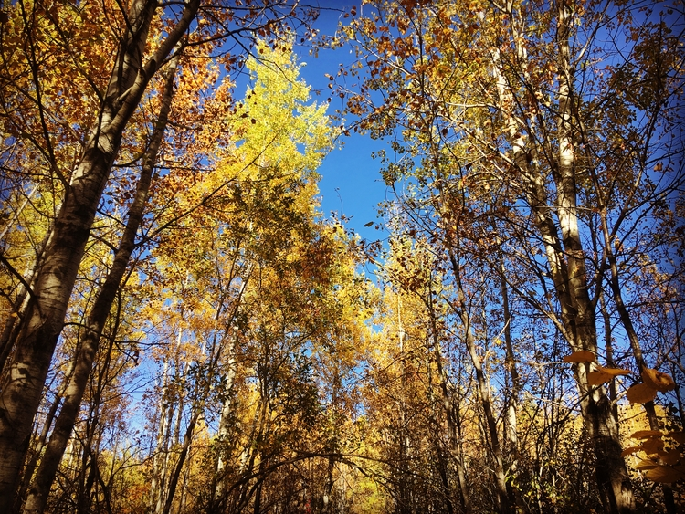 Autumn golden hour - thathennessyguy | ello