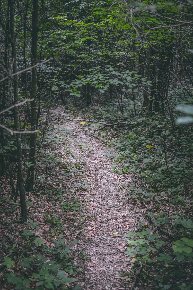 Path - path, threes, forest, photography - captain_lukhasan   ello