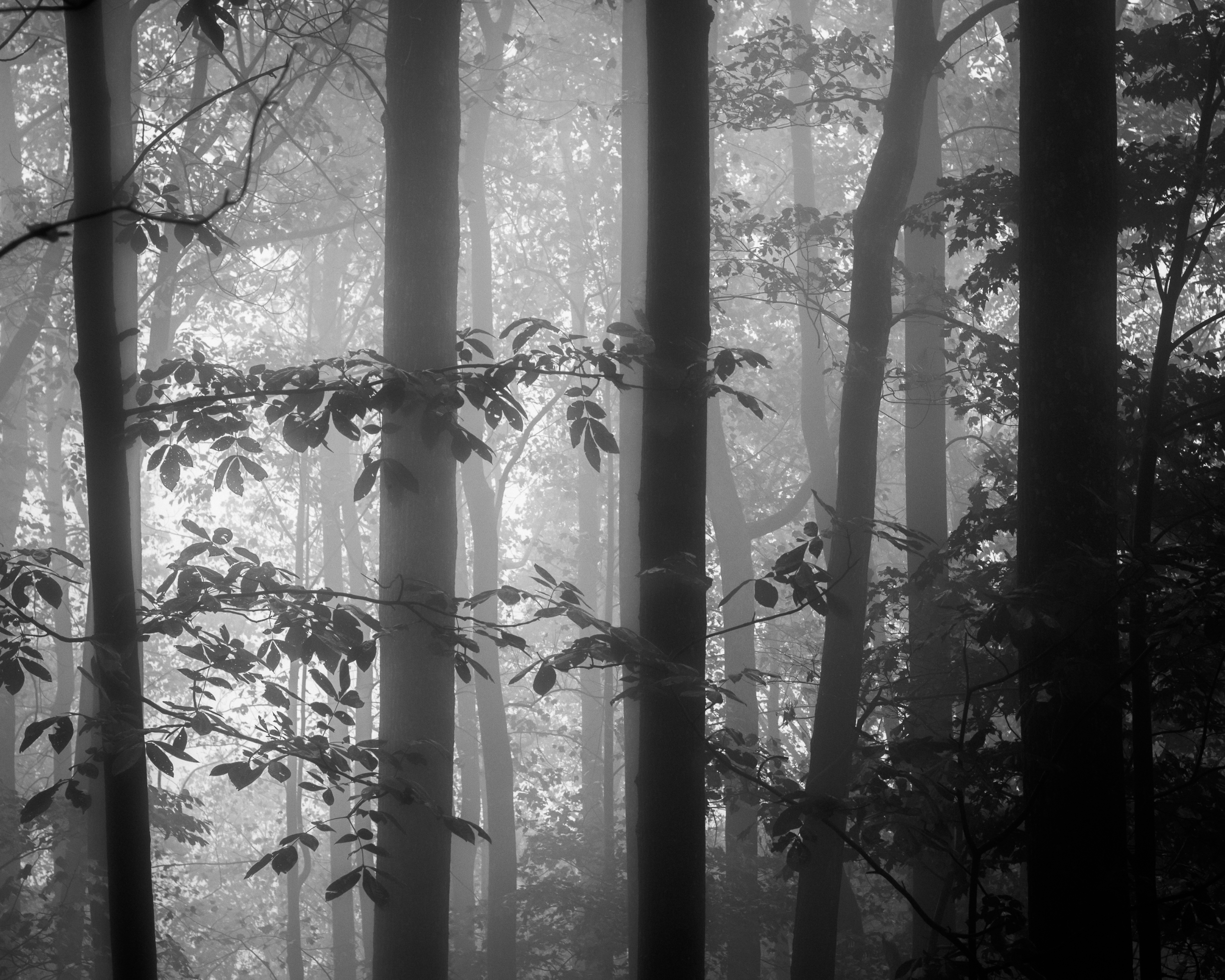 Walking Mountain Rainy Day Flin - jdharvey | ello