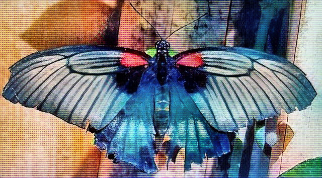 Butterflies Morphing. Page: fil - drakre52 | ello