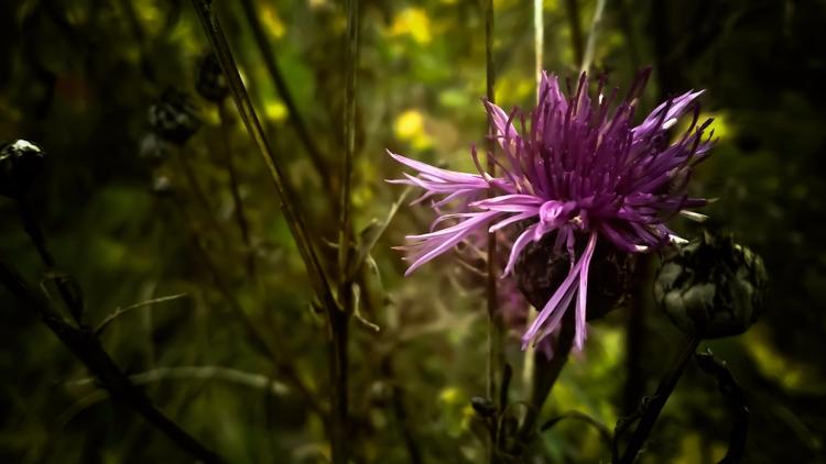 ️#beautiful - natureloversgallery - beheroght | ello