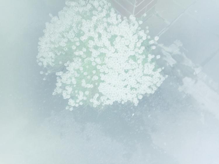 snap, 171017 - kahoyama | ello