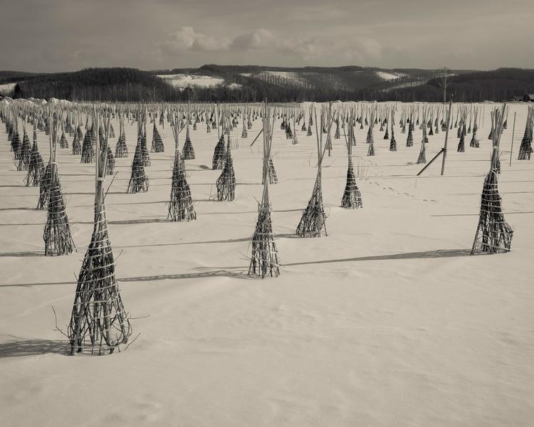 Biei, Hokkaido, Japan, photography - nickpitsas | ello