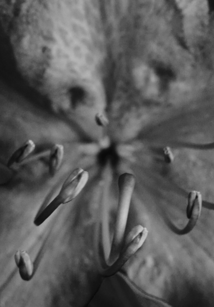 Rhododendron - greyswan | ello
