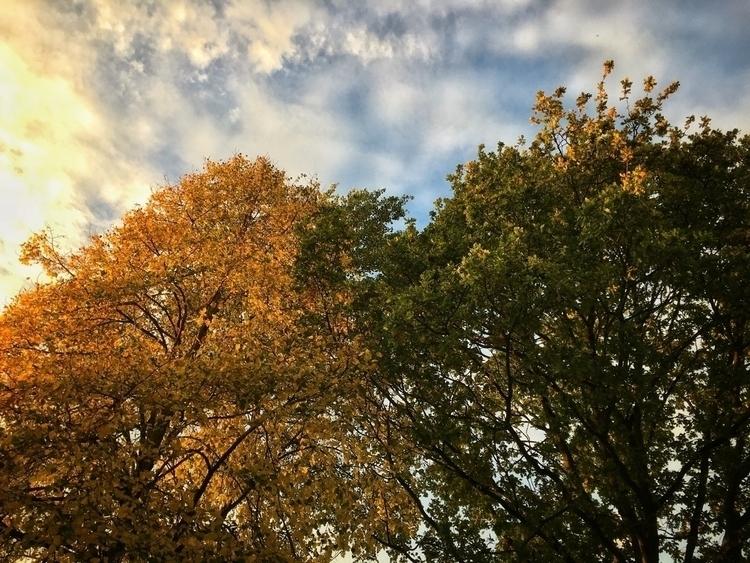 Golden Evening, Norfolk - leaves - davidhawkinsweeks | ello