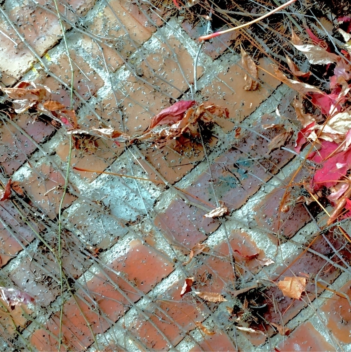 brick fall. sunless, standard B - greyswan | ello