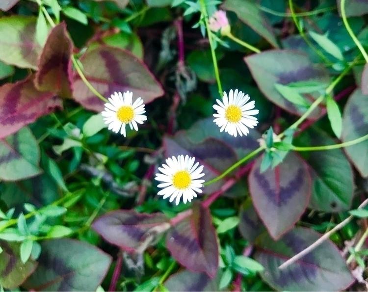 Good morning - flowers - mamimumemami | ello