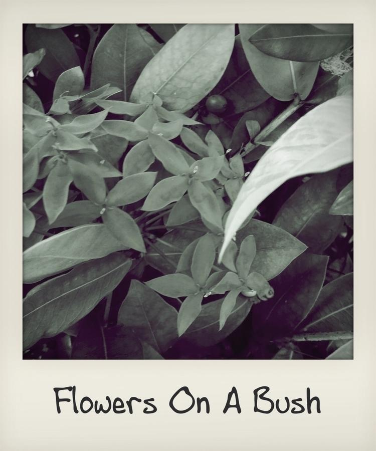 Flowers Bush - mikefl99   ello