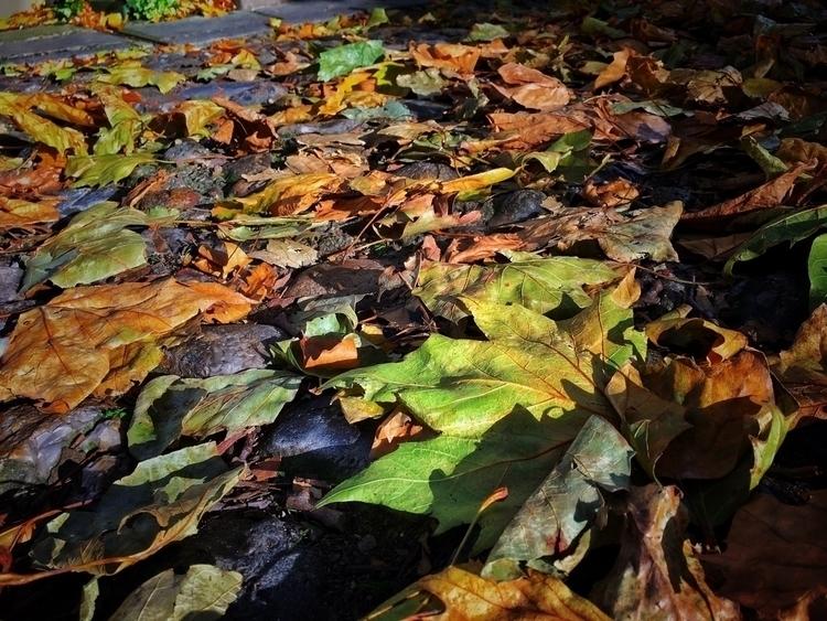 Fallen Leaves, Norfolk - leaves - davidhawkinsweeks | ello