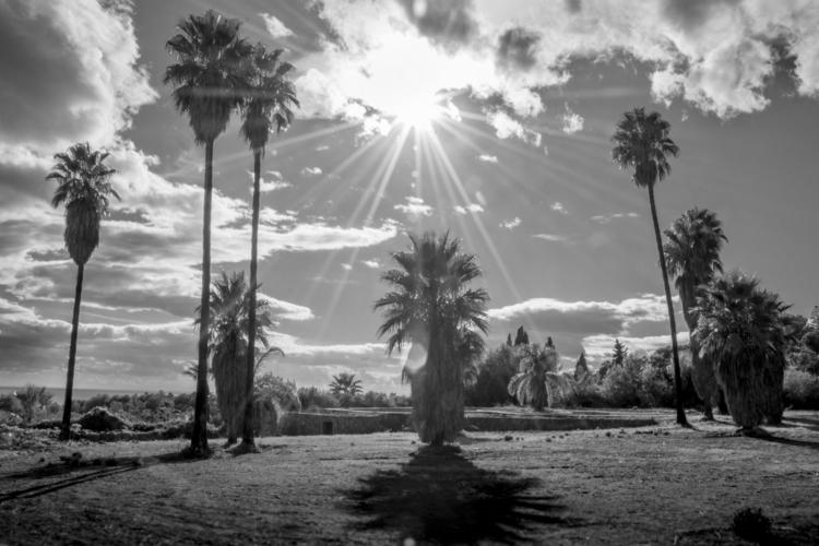 Koja - palmtrees, grass, sky, clouds - dalwenphotography | ello