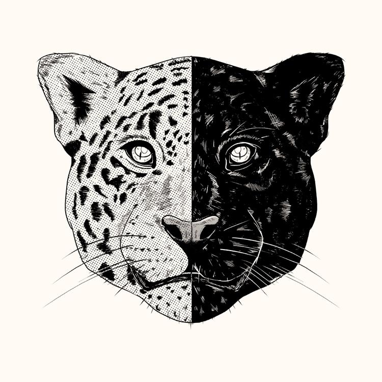 illustration, design, art, animal - studiok91   ello