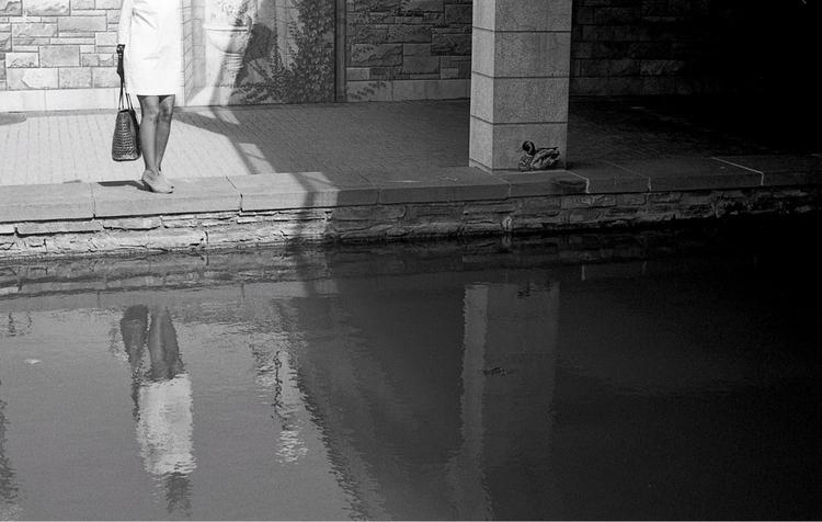 reflecting duck Frederick, MD - film - flaneurity | ello