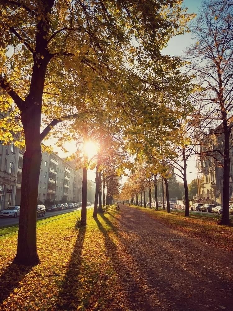 autumn, alley, sun, trees, leafs - claudio_g_c | ello