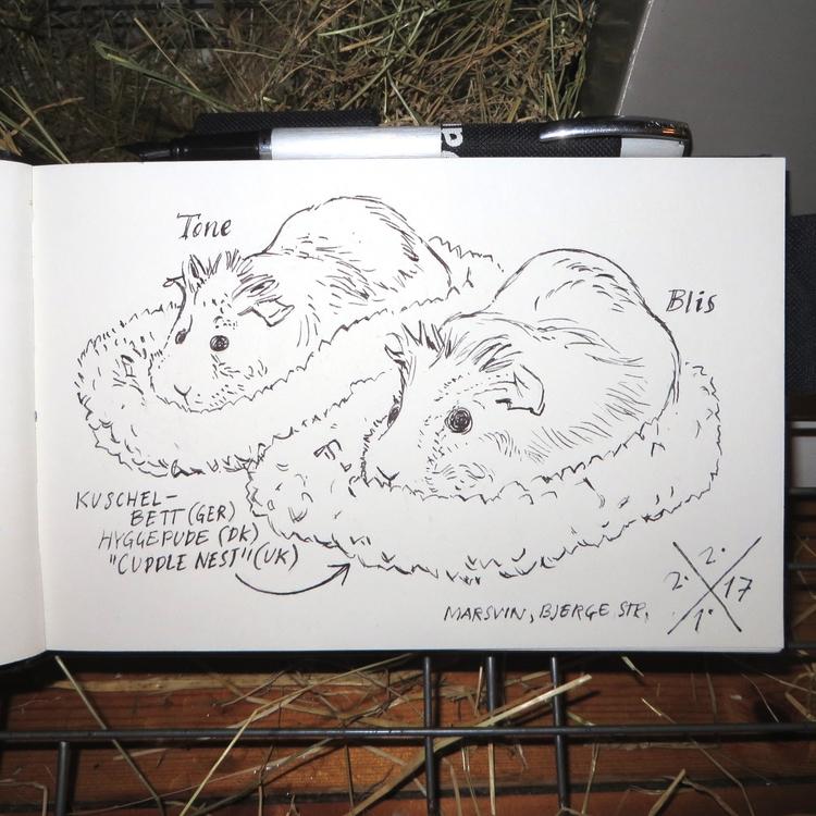 Guinea pigs -- Tone Blis Cuddle - mentalhygiejne | ello
