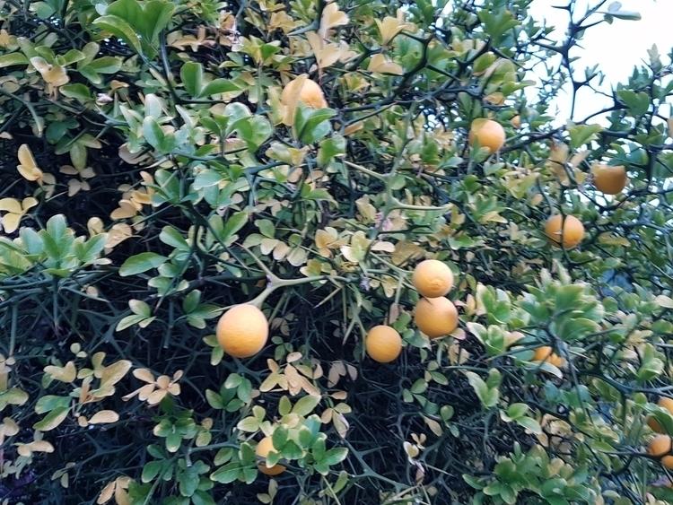 autumn 2017 - bitter orange - photography - santler | ello