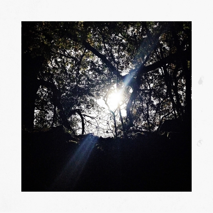 Tangled, space - mindset, mind, nature - yogiwod | ello