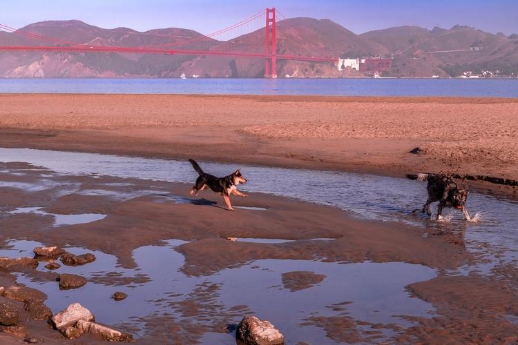 Playing Beach Dogs play beach C - mattgharvey | ello