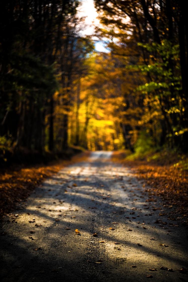 Sunlight dapples dirt road foli - markcollier | ello